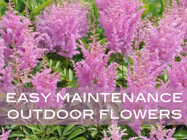 easy maintanacne flowers