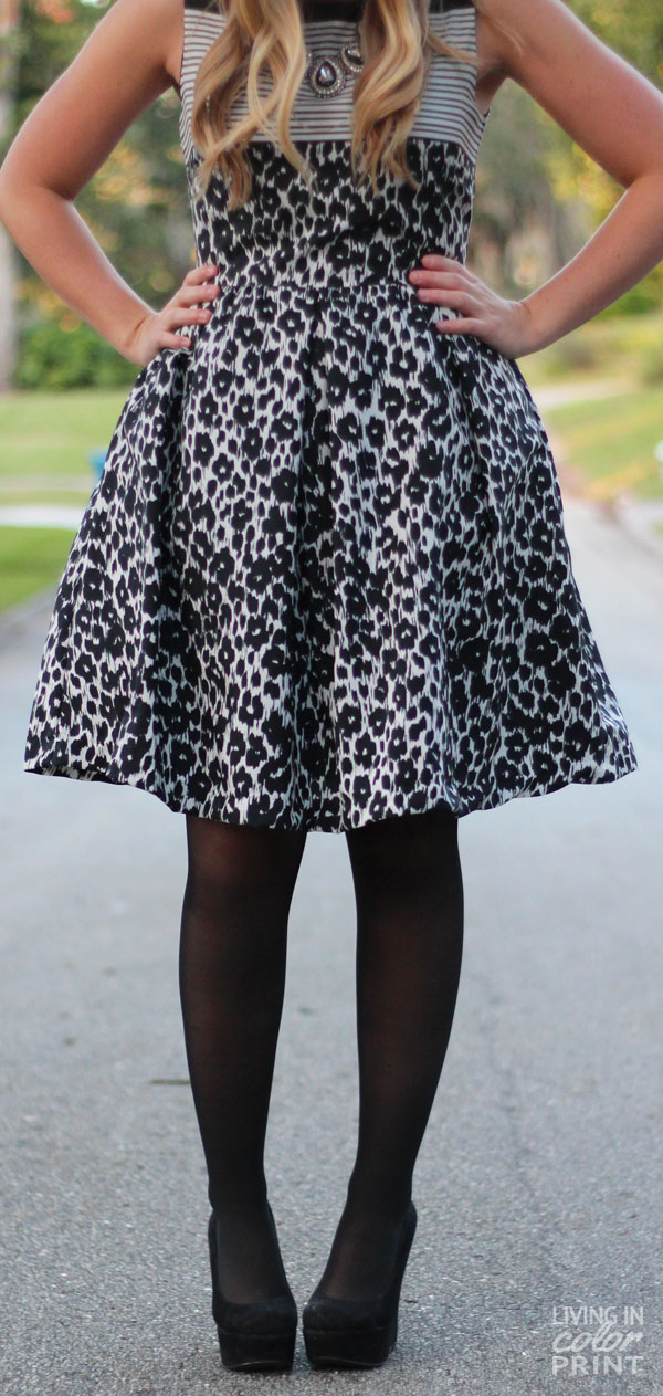 Black + White Cheetah