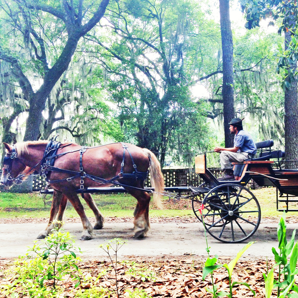 horse and buggy | middletown place charleston