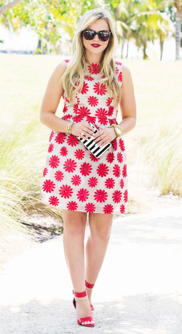 Red Daisies | Living In Color Print