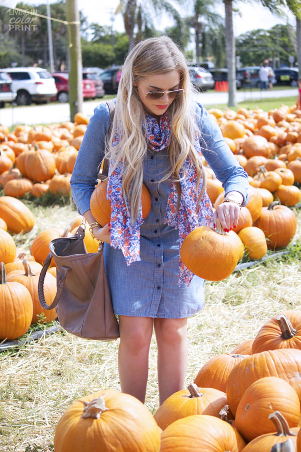 Pumpkin Patch | Living In Color Print