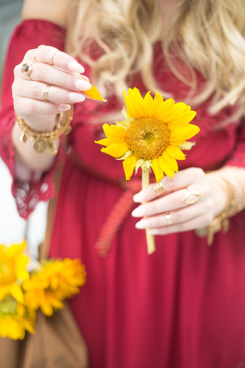 sunflowers-he-loves-me-he-loves-me-not