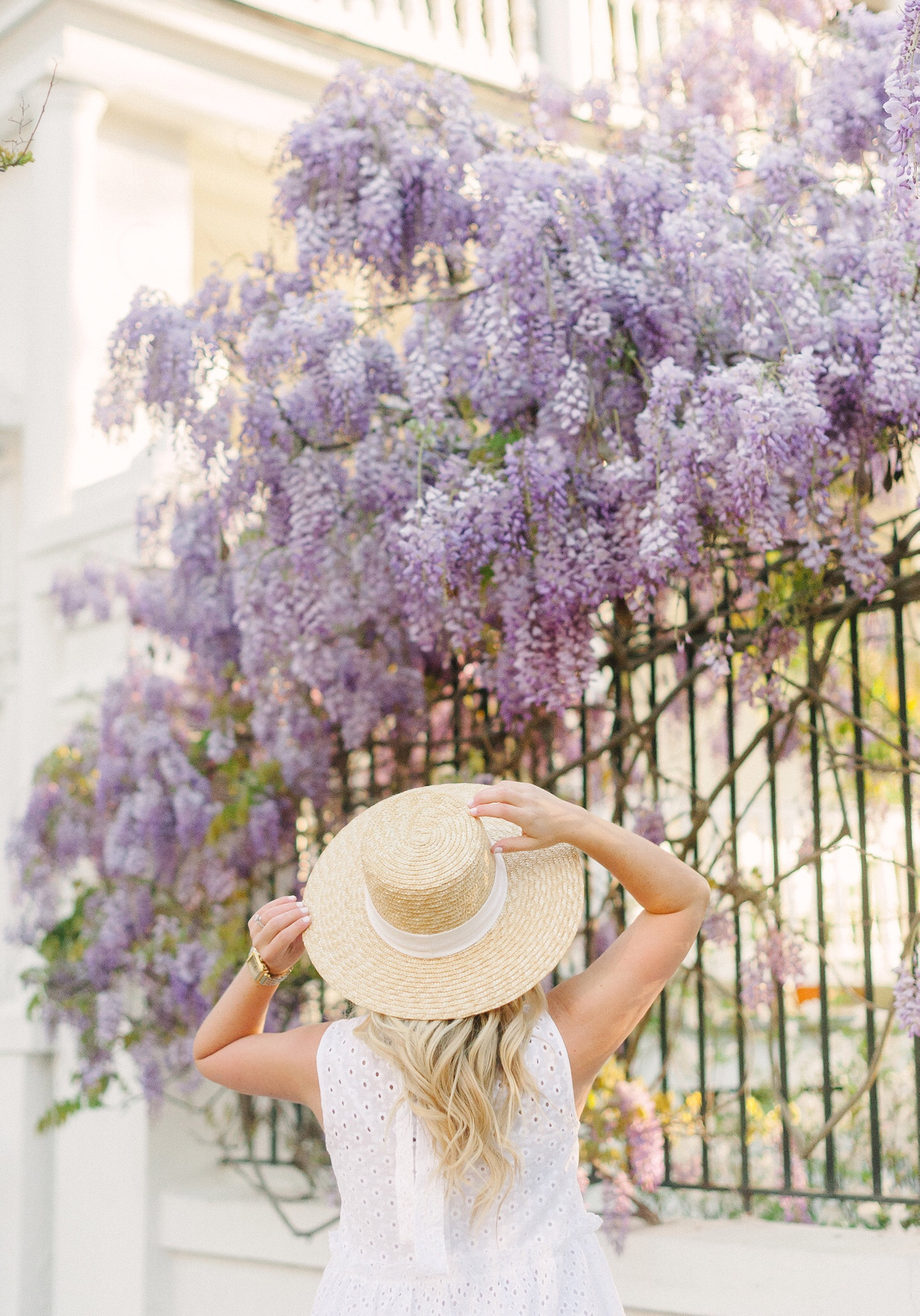 Charleston Flower Guide | Wisteria