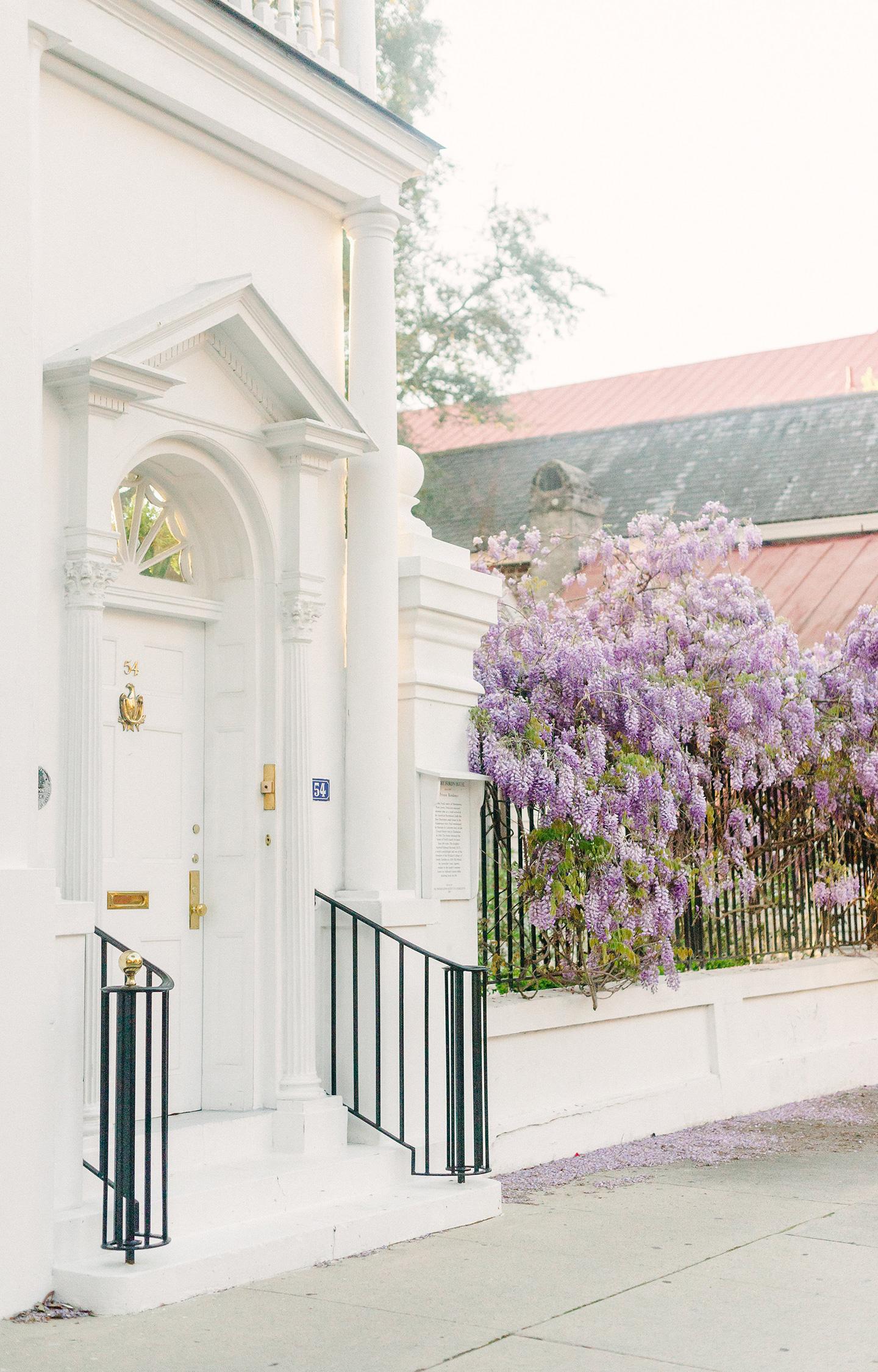 Charleston Wisteria