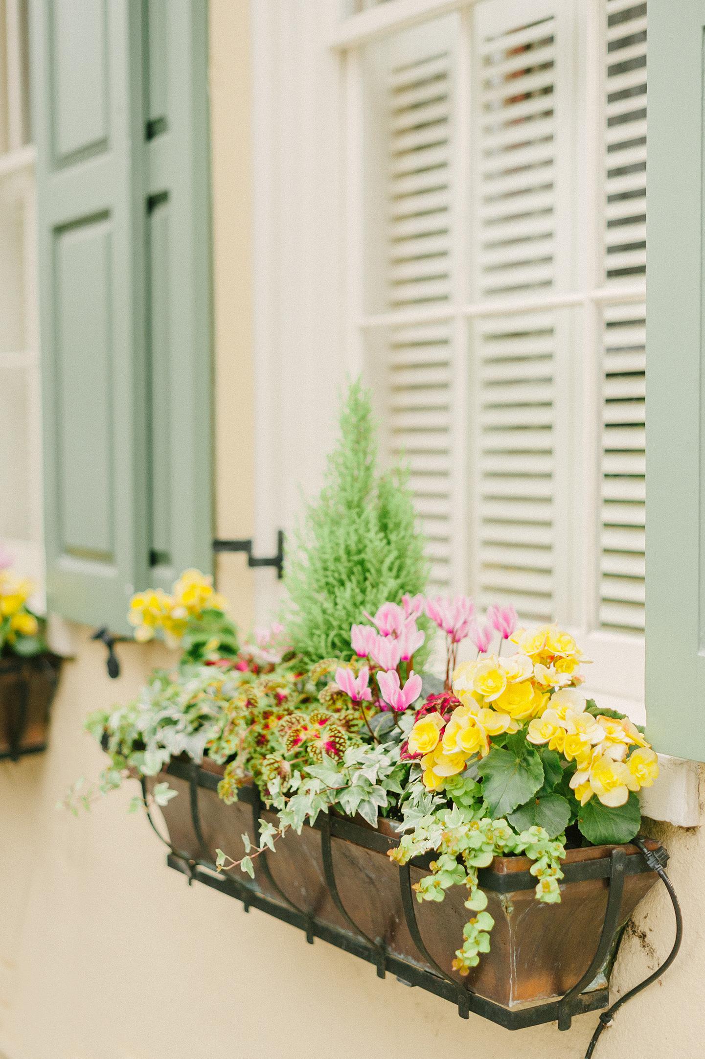 Charleston Green Shutter Windowboxes