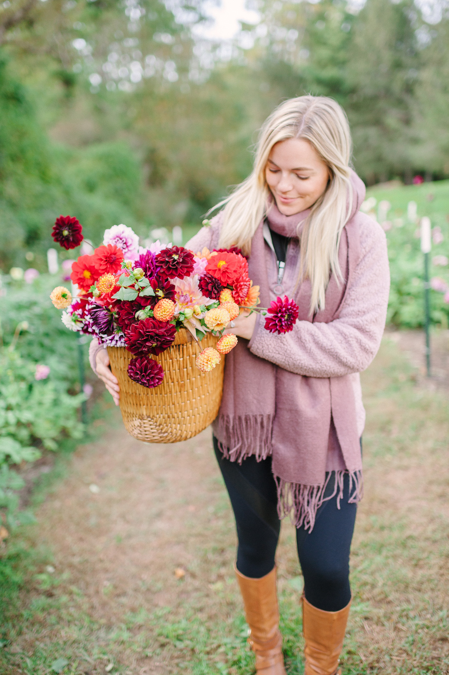 Dahlia Farm | Cashiers, NC || COLOR by K
