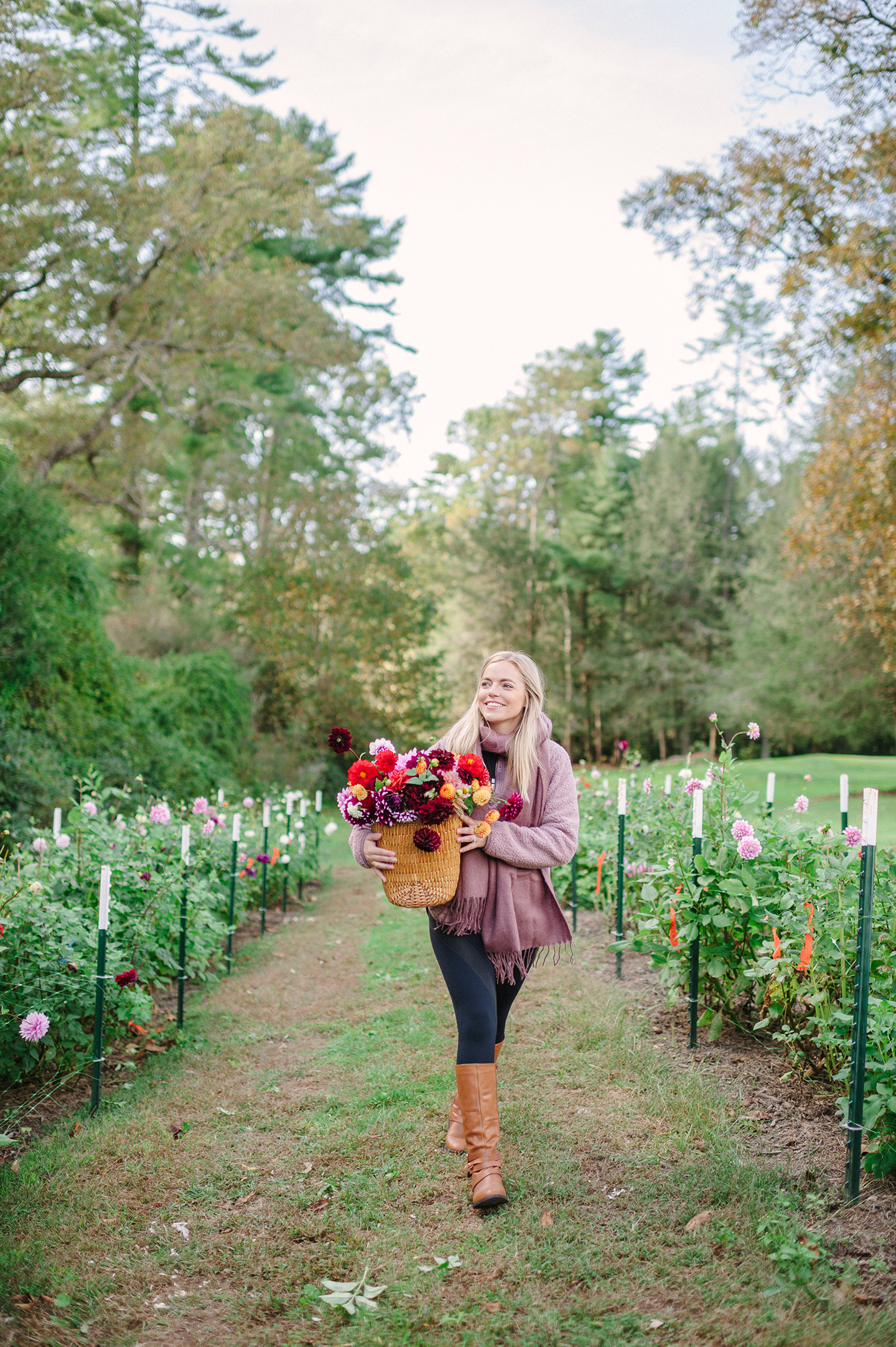 Dahlia Field | Cashiers, NC || COLOR by K