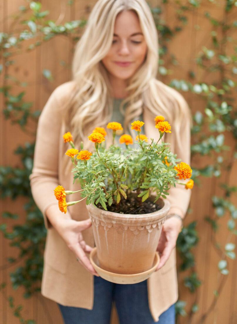 Scalloped Terra Cotta Planter + Marigold Flowers